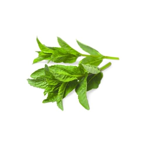biofresh-mint-podina