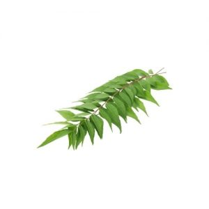 Curry Leaf (Kari Patta) (1 bundle)